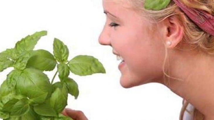 Beneficios de Aplicar Albahaca en la piel
