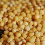 El cereal Mijo Propiedades y Contraindicaciones ¡Que Debes Conocer! ✓